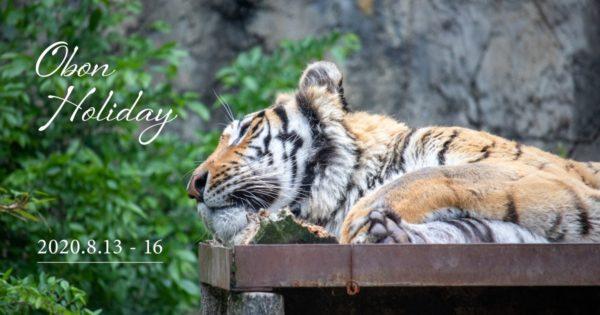 OBON Holiday 2020.8.13-8.16 写真:トラが横たわって寝ている様子